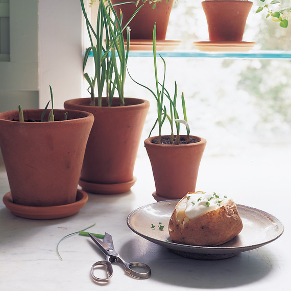 garlic-greens